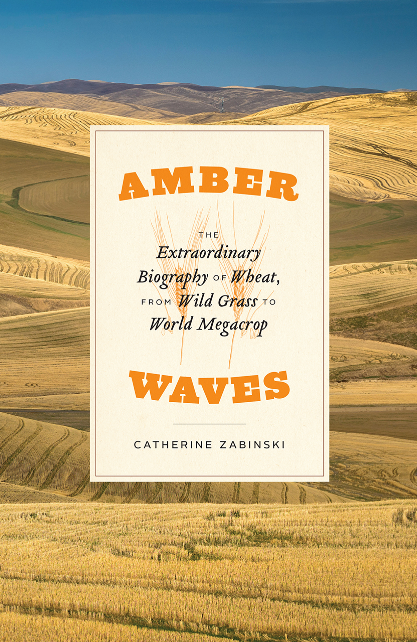 """5 Questions for Catherine Zabinski, author of """"Amber Waves: The Extraordinary Biography of Wheat, from Wild Grass to World Megacrop"""""""