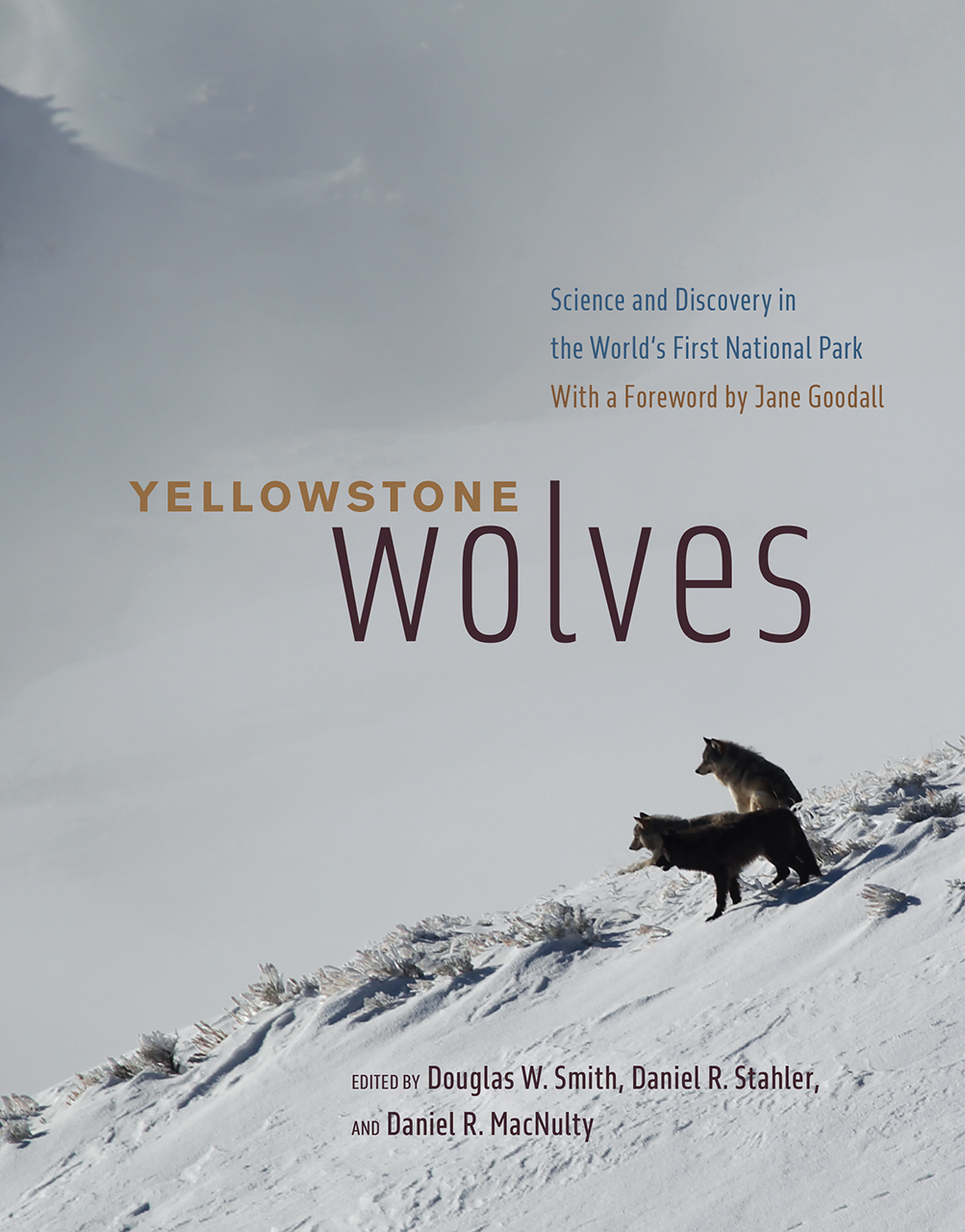 """Watch the Book Trailer for """"Yellowstone Wolves"""""""